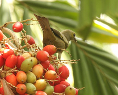 Guyana-0926