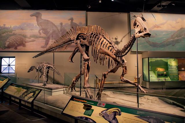 Chicago Field Museum Dinosaur Fossil Flickr Photo
