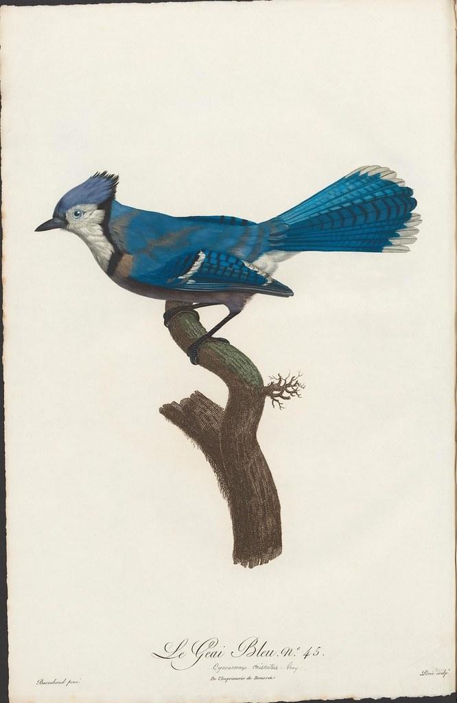 Le Geai Bleu no. 45