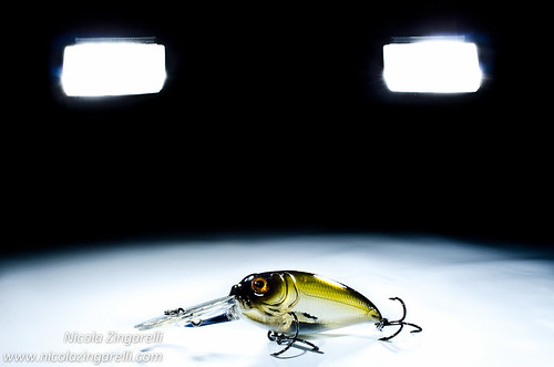 Molix Sculpo lure. Studio shot with three lights by Nicola Zingarelli