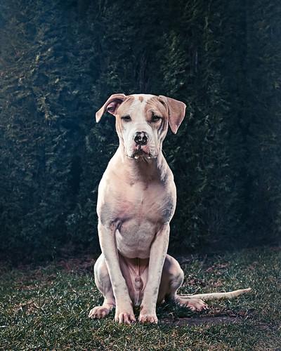 [フリー画像素材] 動物 1, 犬・イヌ ID:201112171000