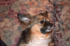 Chloe 2011