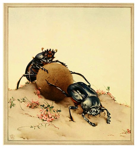 027-El escarabajo sabrado- Fabre's book of insects ..1921-Ilustrado por Edward Detmold