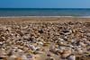 billion of shells by mr pomme de terre
