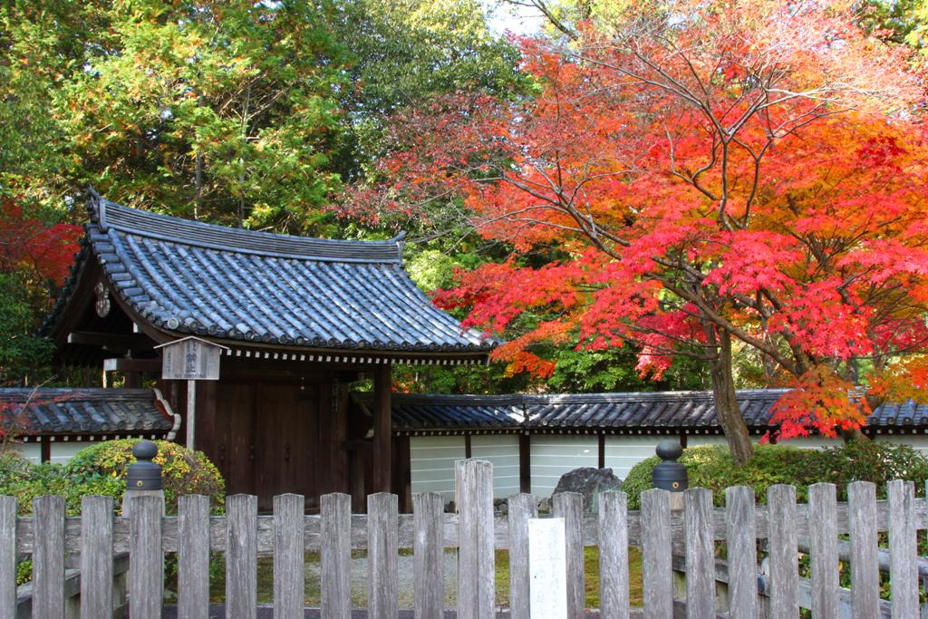 Saihouji (Kokedera) (1)