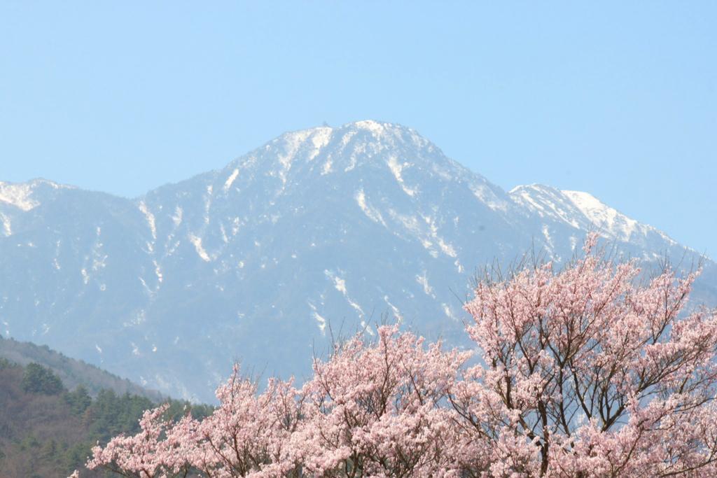 Sakura Photo 2011The Yamadaka Jindai Cherry blossom (5)