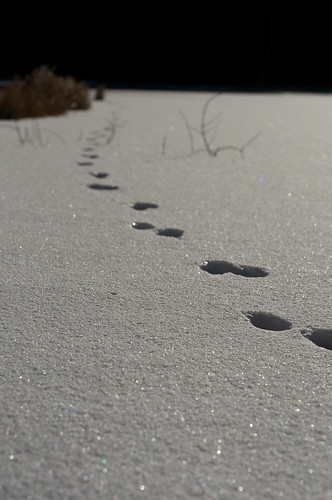 footprints by keganimushi
