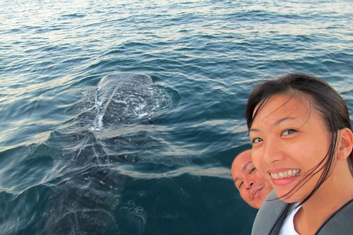 Whale shark (Rhincodon typus) in El Nido, Palawan with EO Kring and MSG Rowin