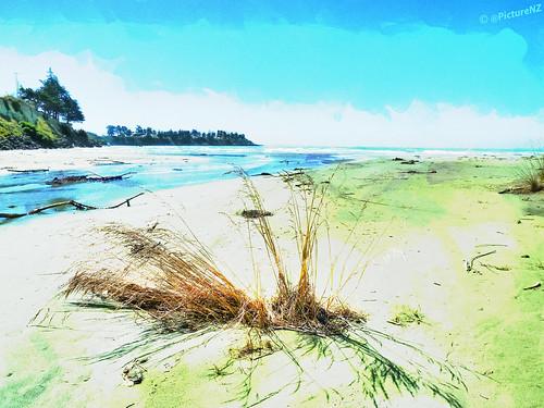 sea newzealand hot art beach grass landscape coast sand bright canterbury cliffs pacificocean nz southisland timaru bakig carolinabay maoripark