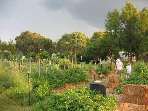 Stormy evening light at community garden