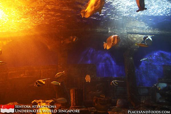 sentosa-underwater-world-7