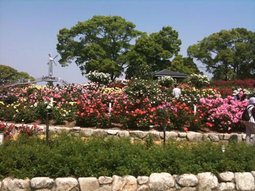 駕与丁公園のバラ祭り