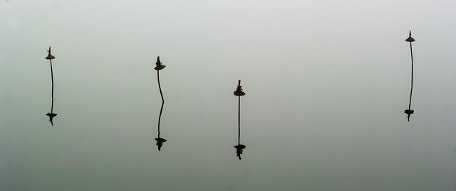 Misty morning, still lake