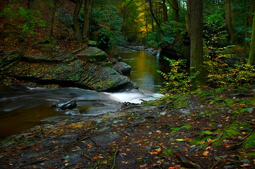 autumn fall nature water leaves creek forest landscape flow evening rocks colorful glow quiet stones peaceful glowing riverbank