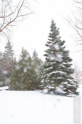Snowstorm-13012012-3