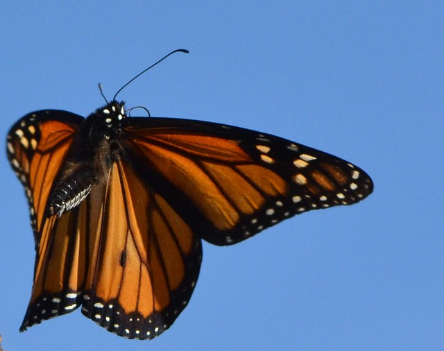 Butterfly flying away - photo#38