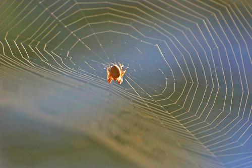 spider glitter