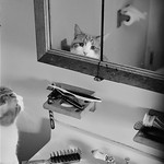 The Cat In The Mirror.