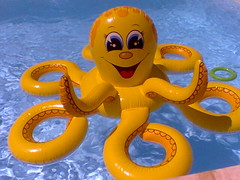 yellow, octopus, invertebrate, marine invertebrates, inflatable, toy,