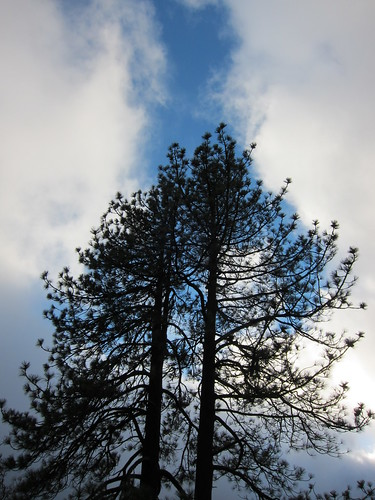 Julian, CA, sky, clouds, pine trees, meadow IMG_9249