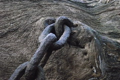 Chained Oak