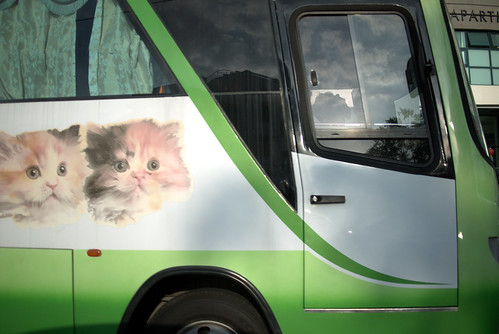 Cats on a bus