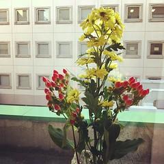 お花をもらったので窓際に飾った