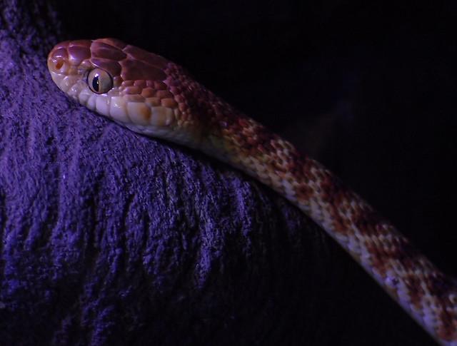 Snake - Crocosaurus Cove Darwin