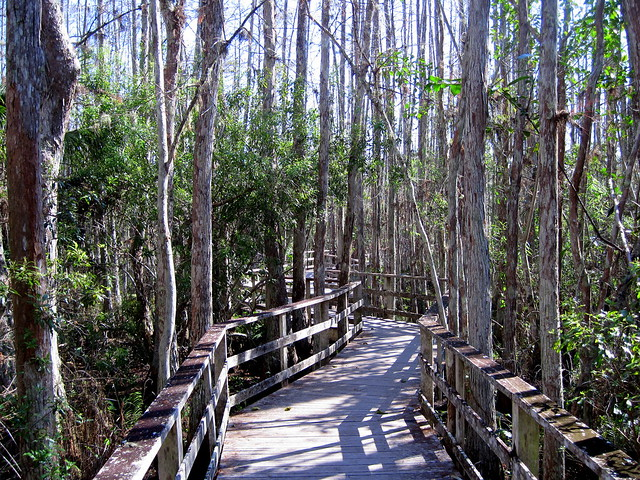 Corkscrew Swamp boardwalk 20120131