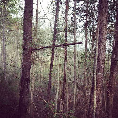 The way of the cross leads home...on the Longleaf Trace