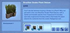 Brazillian Snake Plant Deluxe