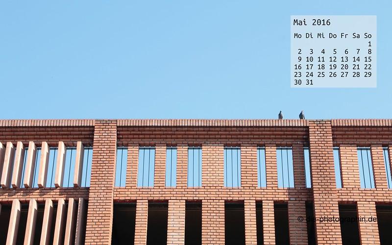 tauben_mai_kalender_die-photographin
