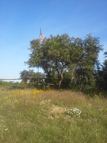 Our Old Glory Flying above Texas Wildflowers