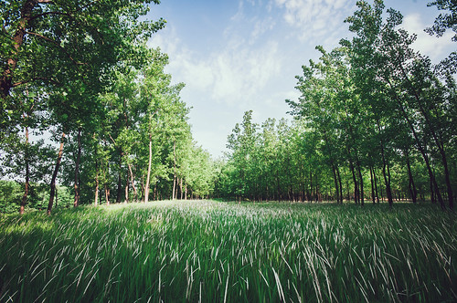china tree green nature grass weather forest landscape spring day cloudy grove peaceful grassland hefei