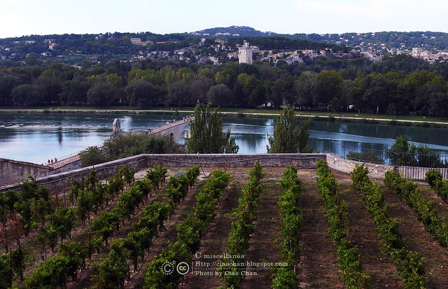 Bonjour Avignon~ 亞維農。香料草味兒的城市  R1041932
