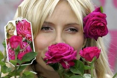 rosa-Heidi-Klum