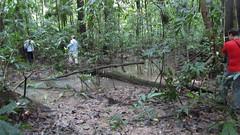 Guyana-3047
