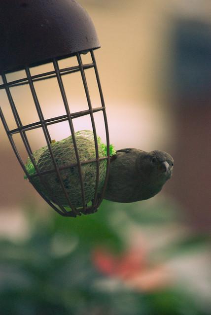 261111_ sparrow #4