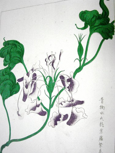 Asagao (Ipomoea nil) - Edo Period Japan by Gerris2