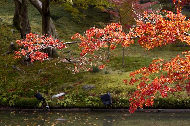 絕美京都 「楓」情萬種
