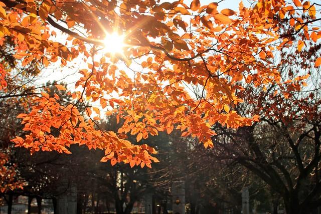 色づくの季節