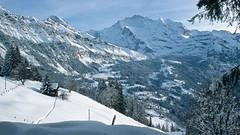 Lauterbrunnen - sjezd do údolí po sjezdovce Infernopiste má technické zasněžování
