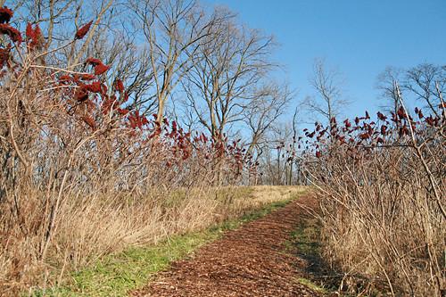 Morton Arboretum - December