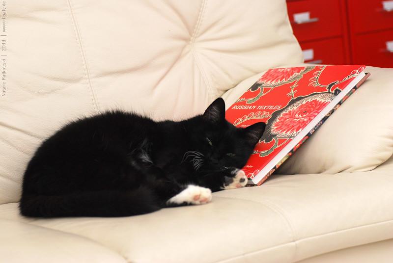 Book-worm? No. Book-cat :-)