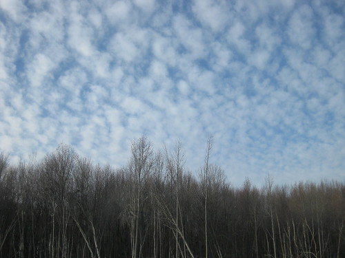 Christmas Day 2011: Blue Sky