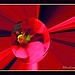 Small photo of - Abstract Art Images