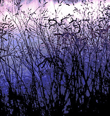 Silhouette Grasses and Pond (Digital Woodcut) by randubnick