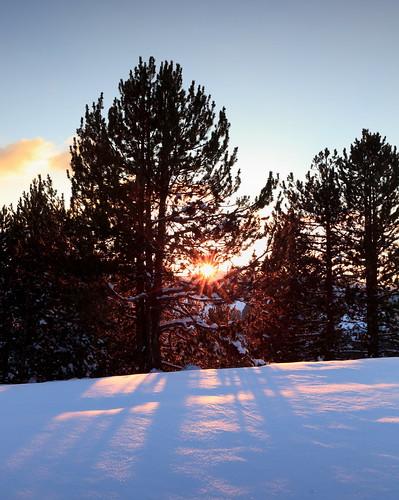 sunset mountain snow tree pine greece