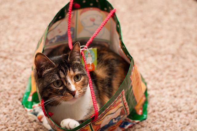 Kitty Present