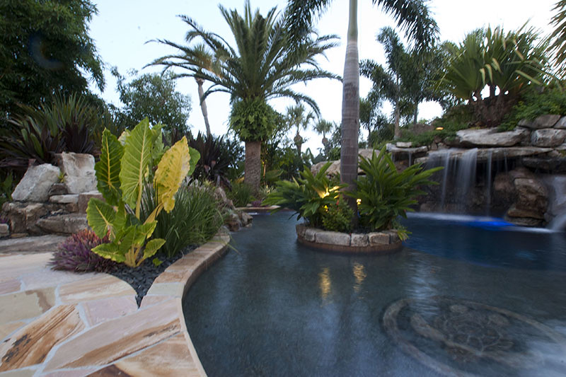Landscaping swimming pool tropical plants sarasota bradenton florida 2 a photo on flickriver for Best plants around swimming pool
